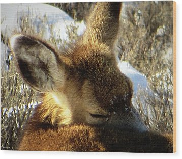 Napping Fawn Wood Print by Karen Shackles
