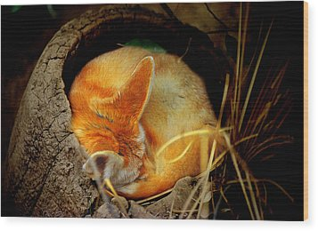 Napping Fennec Fox Wood Print by Greg Slocum