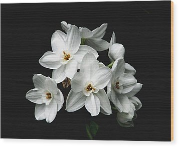 Narcissus The Breath Of Spring Wood Print by Angela Davies