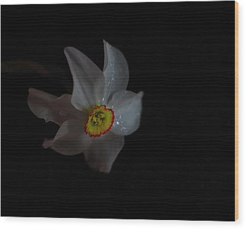Wood Print featuring the photograph Narcissus by Susan Capuano