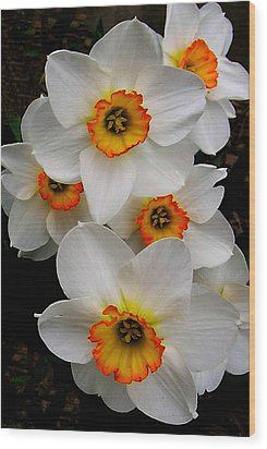 Narcissus Tazetta Wood Print by Kathleen Stephens