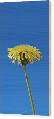 Wood Print featuring the photograph Narrow Poster - Little Piece Of Sunshine  by Marilynne Bull