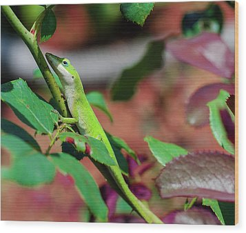 Native Anole Wood Print