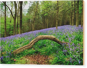 Natural Arch And Bluebells Wood Print by John Edwards