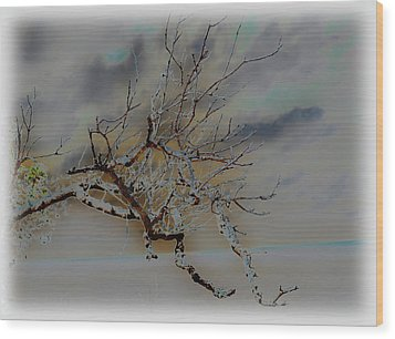 Natural Inversion -1 Wood Print by Amanda Vouglas