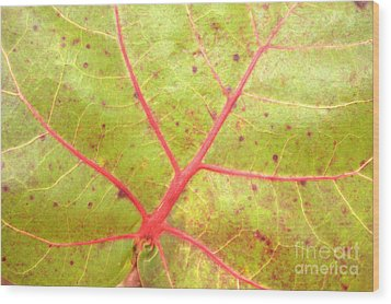 Nature Abstract Sea Grape Leaf Wood Print by Carol Groenen