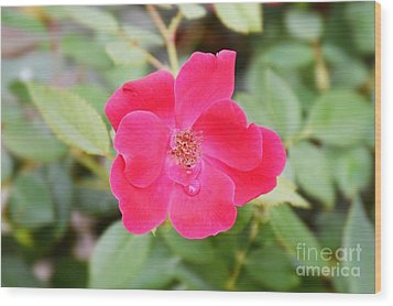 Wood Print featuring the photograph Nature - Colorful Flower Gifts  by Ray Shrewsberry