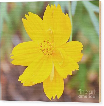 Wood Print featuring the photograph Nature Colorful Flower Gifts - Yellow by Ray Shrewsberry