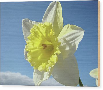 Nature Daffodil Flowers Art Prints Spring Nature Art Wood Print by Baslee Troutman