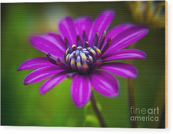 Nature Explosion Wood Print by Alessandro Giorgi Art Photography