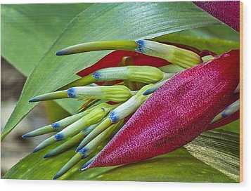 Nature In Bloom Wood Print by Carolyn Marshall