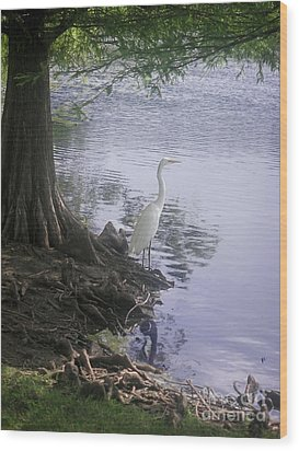 Nature In The Wild - Musings By A Lake Wood Print by Lucyna A M Green