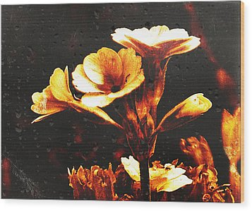 Wood Print featuring the photograph Nature Uncovered  by Fine Art By Andrew David