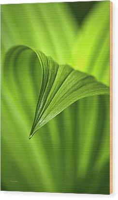 Nature Unfurls Wood Print by Christina Rollo
