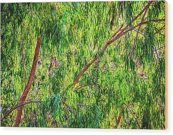 Wood Print featuring the photograph Natures Greens, Yanchep National Park by Dave Catley
