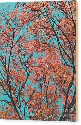 Natures Magic - Orange Wood Print by Rebecca Harman