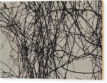 Nature's Pen And Ink 2 Wood Print by Susie DeZarn