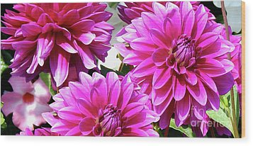 Natures Perfume Dahlias Red Tones Wood Print