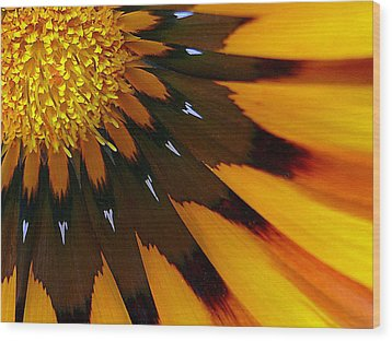 Nature's Pinwheel Wood Print by Marion Cullen