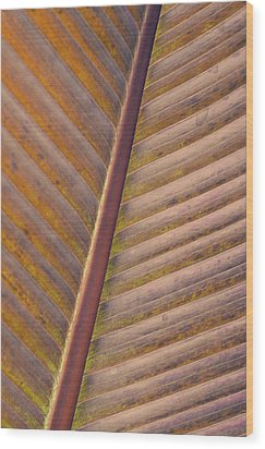 Wood Print featuring the photograph Nature's Plant Leaf  by Julie Palencia