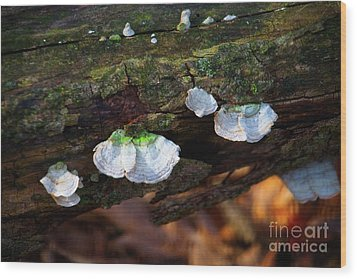 Wood Print featuring the photograph Natures Ruffles - Cascade Wi by Mary Machare