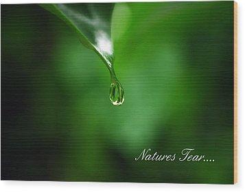 Natures Tear Wood Print by Lori Tambakis