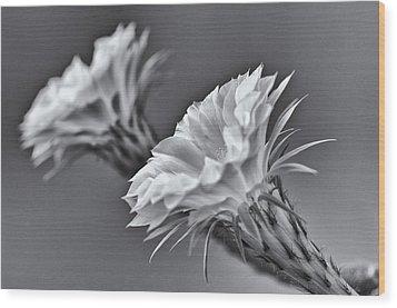 Nature's Trumpets Wood Print