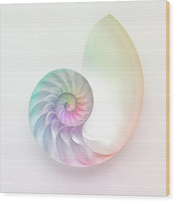 Nautilus Shell Wood Print by Angel Rodriguez