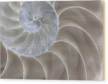Nautilus Shell II Wood Print by John Hix