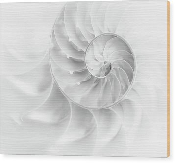 Wood Print featuring the photograph Nautilus Shell In High Key by Tom Mc Nemar