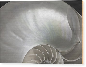 Nautilus Shell Wood Print by John Hix
