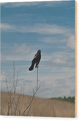 Wood Print featuring the photograph Nebraska Red-winged Black Bird by Joshua House