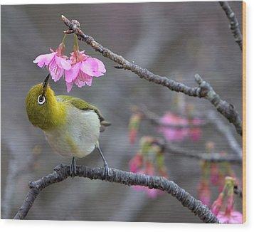 Nectar Wood Print by Karen Walzer