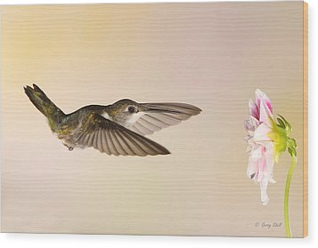 Wood Print featuring the photograph Nectar Seeking Missile by Gerry Sibell
