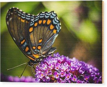 Butterfly Beauty  Wood Print by Bruce Pritchett