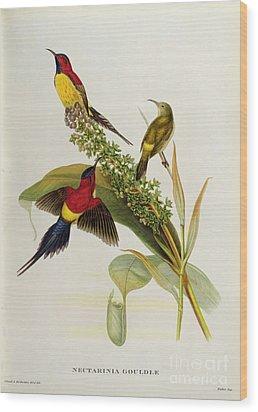 Nectarinia Gouldae Wood Print by John Gould