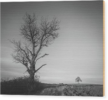 Wood Print featuring the photograph Neighbours by Davorin Mance