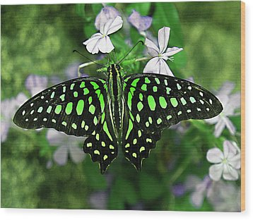 Neon --- Tailed Jay Butterfly Wood Print
