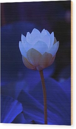 Neon Lotus Wood Print by Carolyn Dalessandro