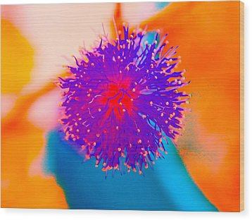 Neon Pink Puff Explosion Wood Print by Samantha Thome