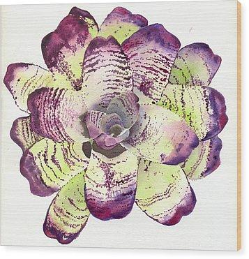 Neoregelia 'freeman's Vision' Wood Print by Penrith Goff