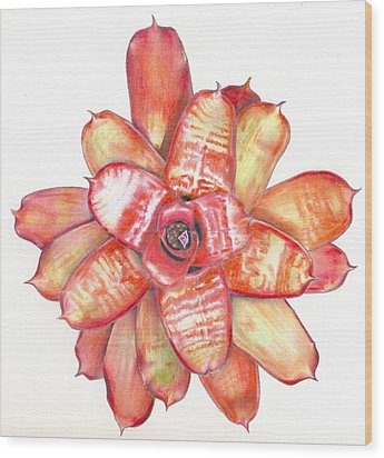 Neoregelia Small Wonder Wood Print
