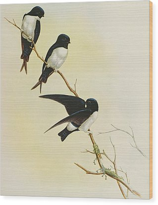 Nepal House Martin Wood Print by John Gould