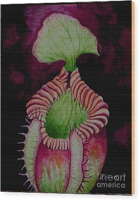 Nepenthes Villosa Wood Print by Edoen Kang