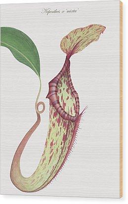 Nepenthes X 'mixta' Wood Print by Scott Bennett