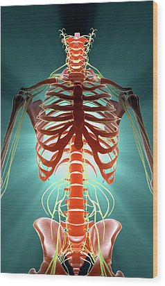 Nerves Wood Print by MedicalRF.com