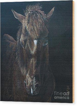 Nervous Colt  Milltown Fair Wood Print by Pauline Sharp