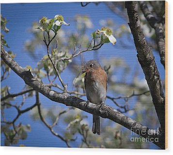 Wood Print featuring the photograph Nest Building by Douglas Stucky