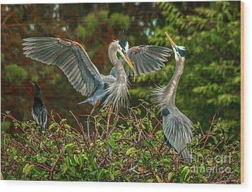 Nest Landing Wood Print by Tom Claud