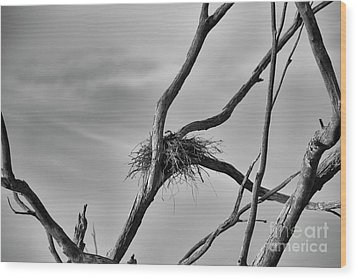 Wood Print featuring the photograph Nested by Douglas Barnard